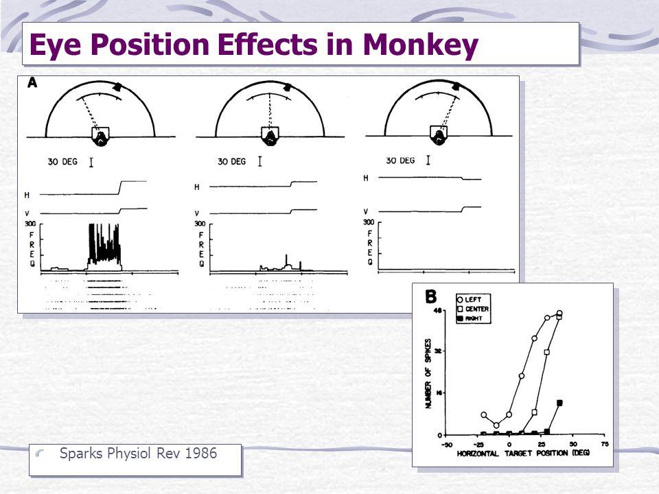 Eye Position Effects in Monkey
