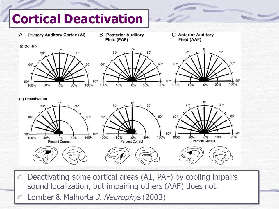 Cortical Deactivation