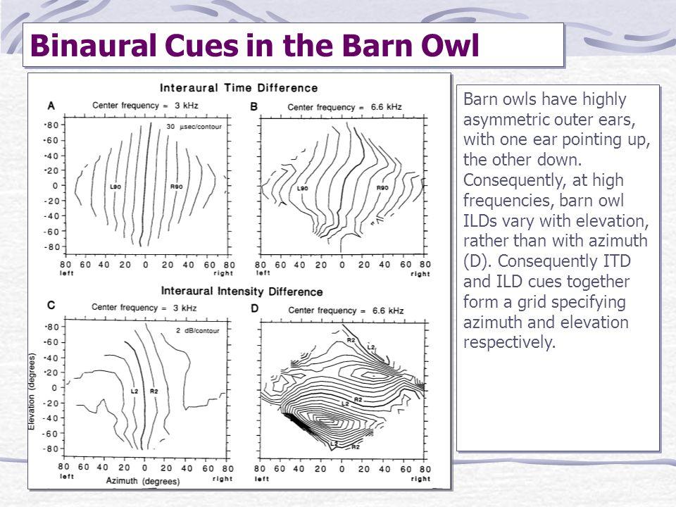 Binaural Cues in the Barn Owl