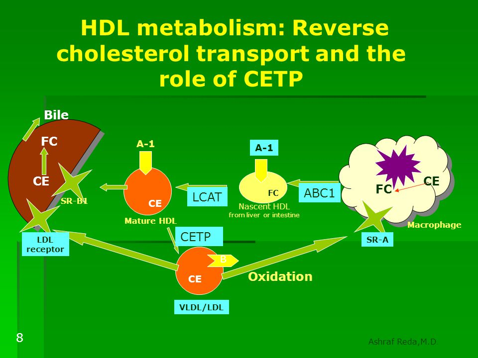 HDL metabolism: Reverse cholesterol transport and the role of CETP