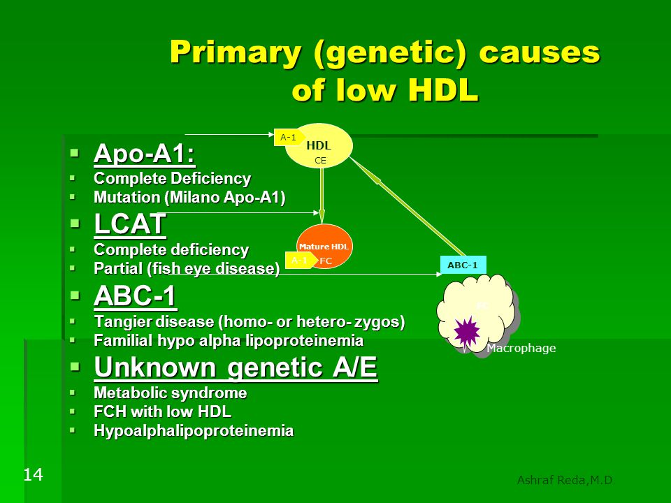 Primary (genetic) causes of low HDL
