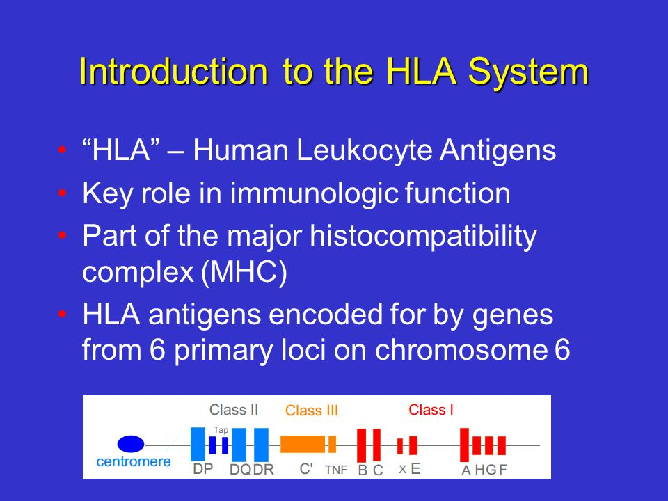 Introduction to the HLA System