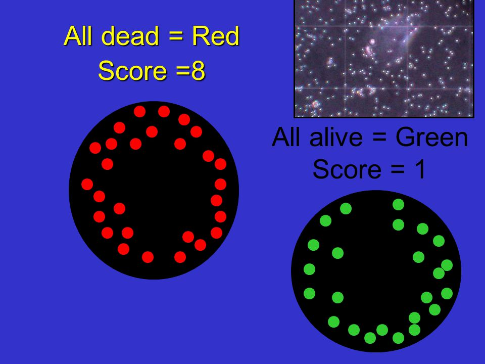 All dead = Red Score =8 All alive = Green Score = 1