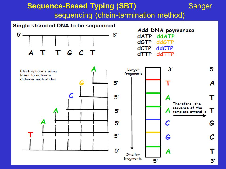 Sequence-Based Typing (SBT) Sanger sequencing (chain-termination method)
