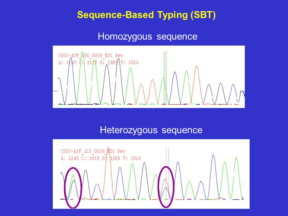 Sequence-Based Typing (SBT)