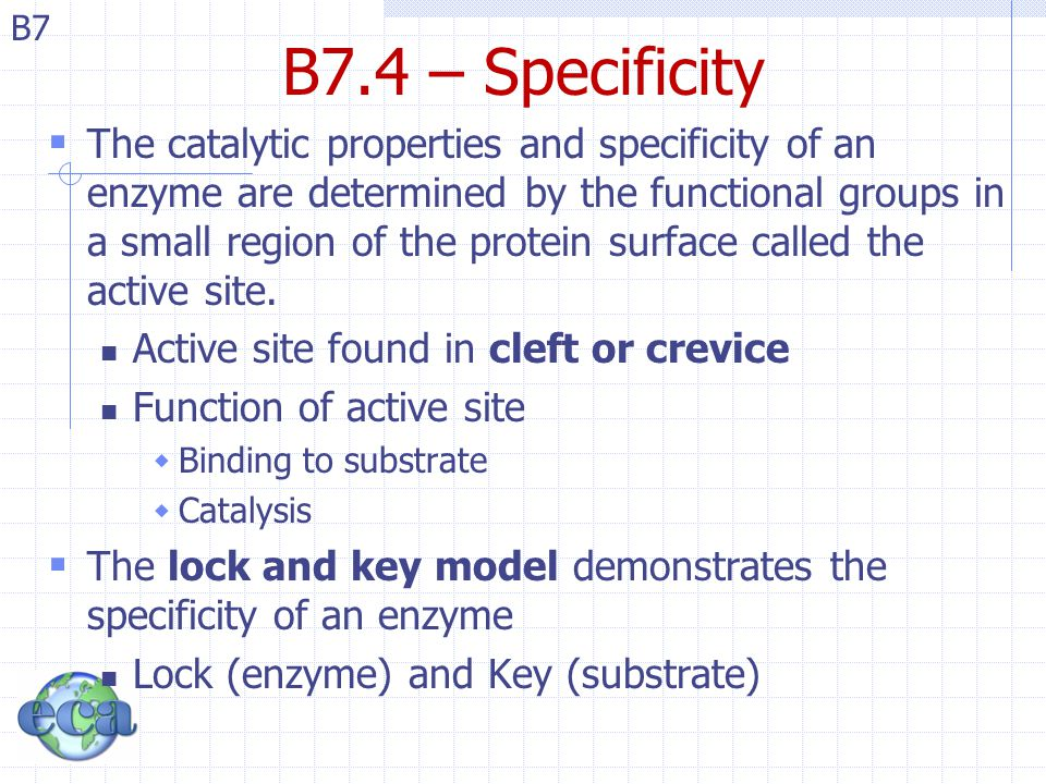 B7.4 – Specificity