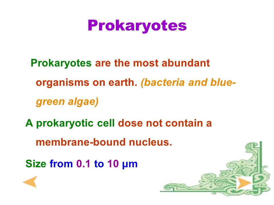 Prokaryotes Prokaryotes are the most abundant organisms on earth. (bacteria and blue-green algae)