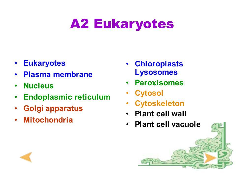 A2 Eukaryotes Chloroplasts Lysosomes Eukaryotes Plasma membrane