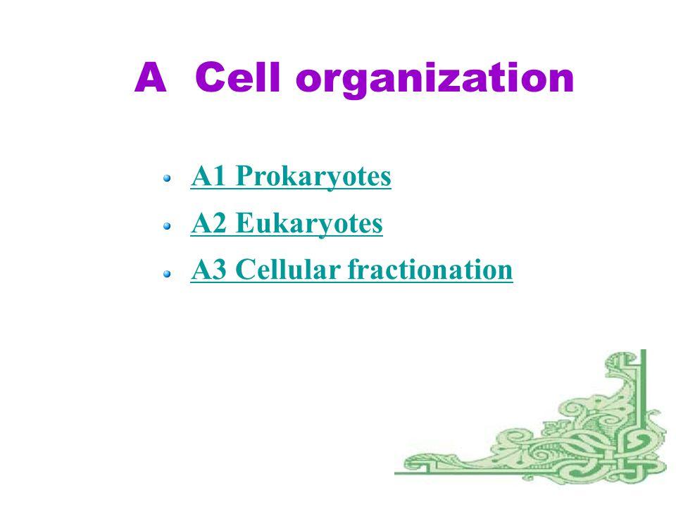 A Cell organization A1 Prokaryotes A2 Eukaryotes