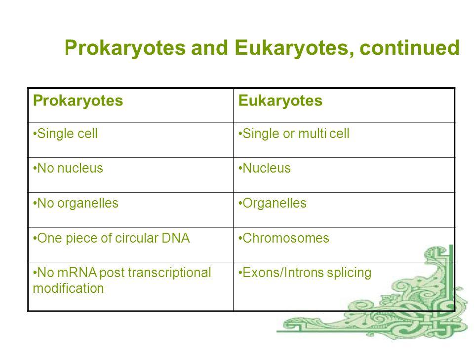 Prokaryotes and Eukaryotes, continued