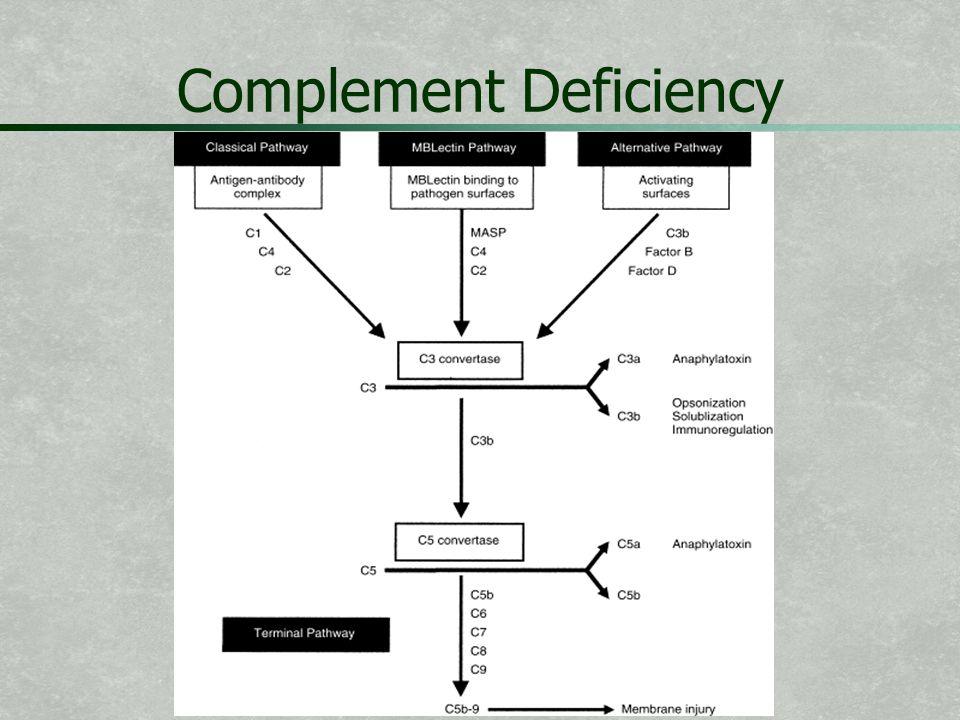 Complement Deficiency