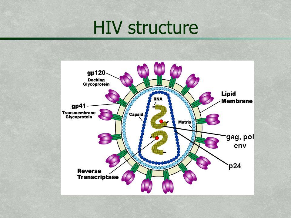 HIV structure gag, pol env p24