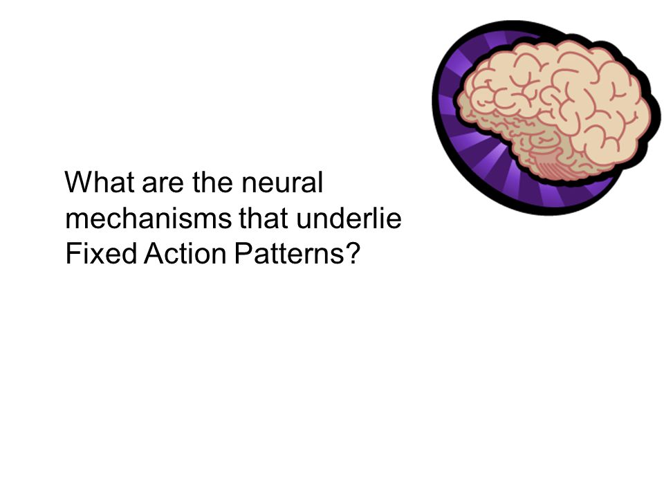 What are the neural mechanisms that underlie Fixed Action Patterns