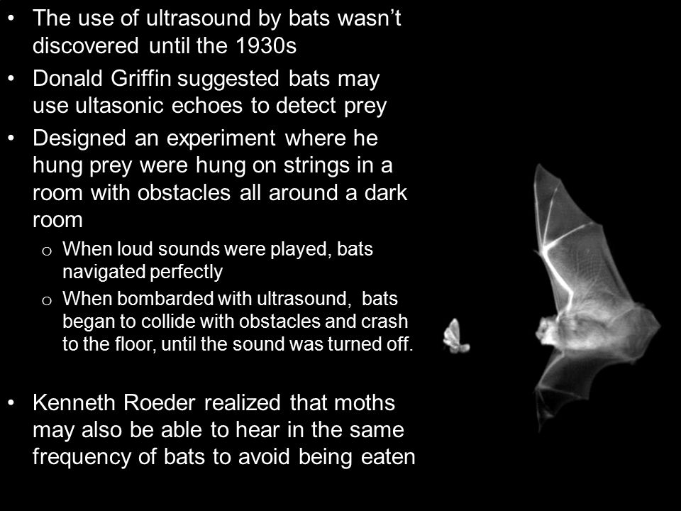 The use of ultrasound by bats wasn't discovered until the 1930s