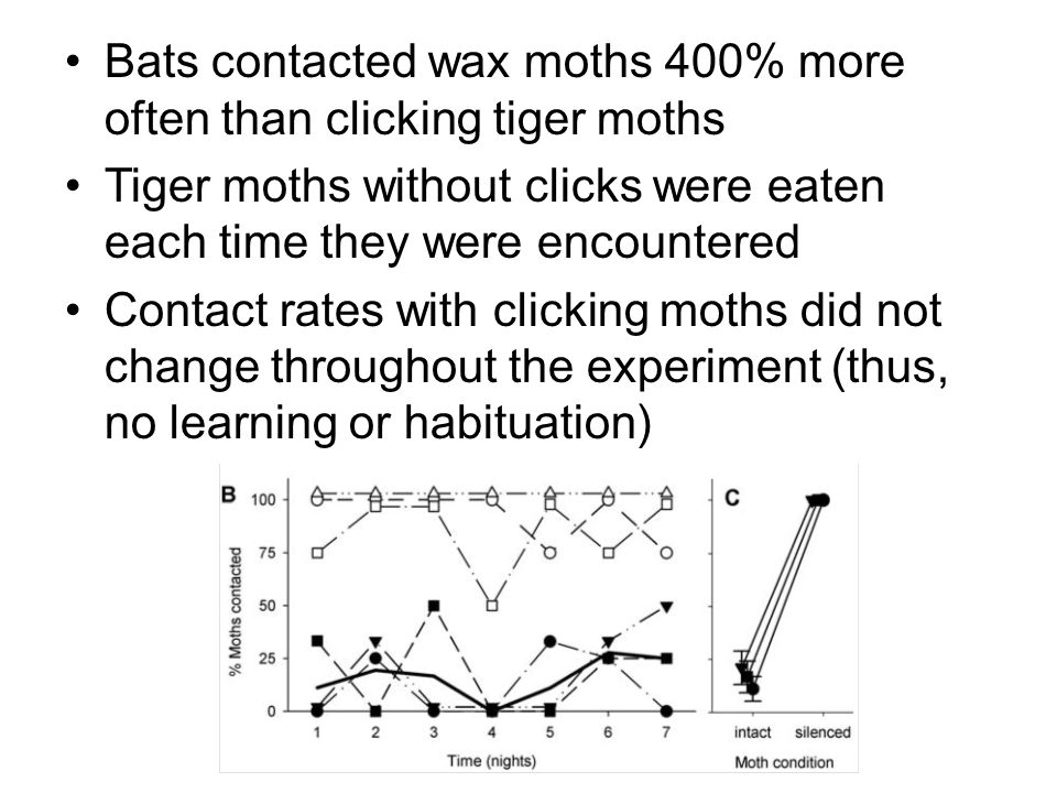 Bats contacted wax moths 400% more often than clicking tiger moths