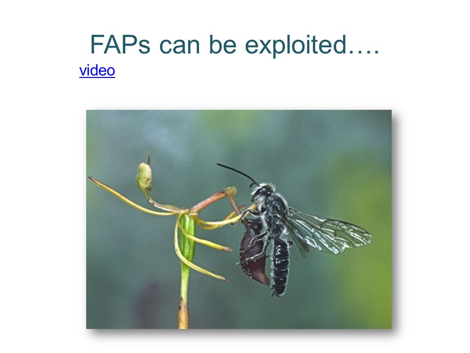 FAPs can be exploited…. video