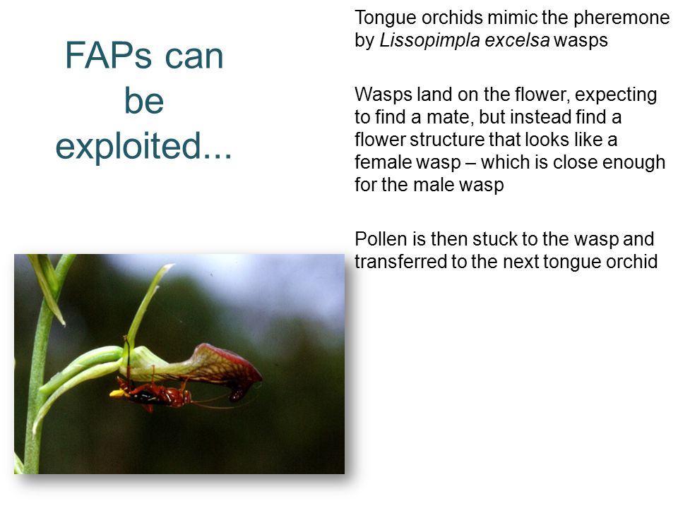 FAPs can be exploited...