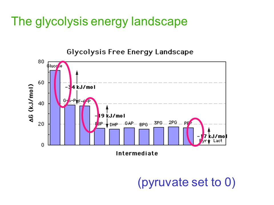 The glycolysis energy landscape