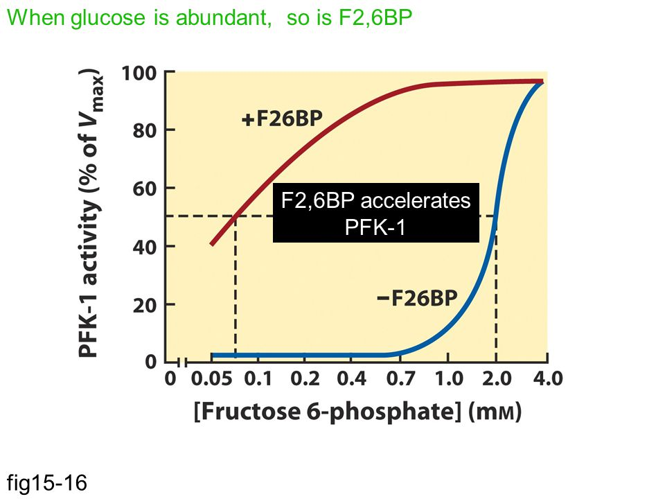 When glucose is abundant, so is F2,6BP