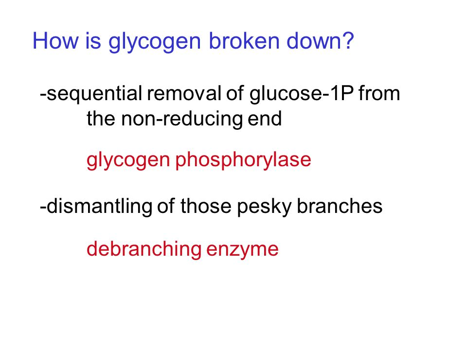 How is glycogen broken down