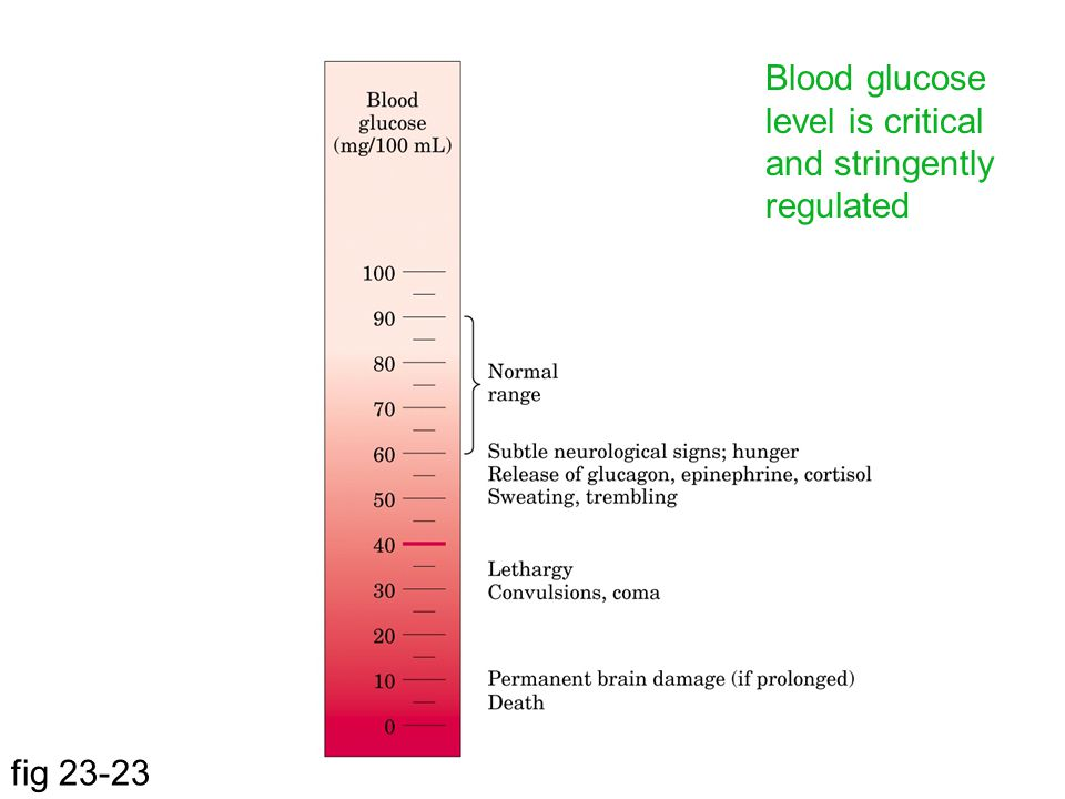 Blood glucose level is critical and stringently regulated fig 23-23