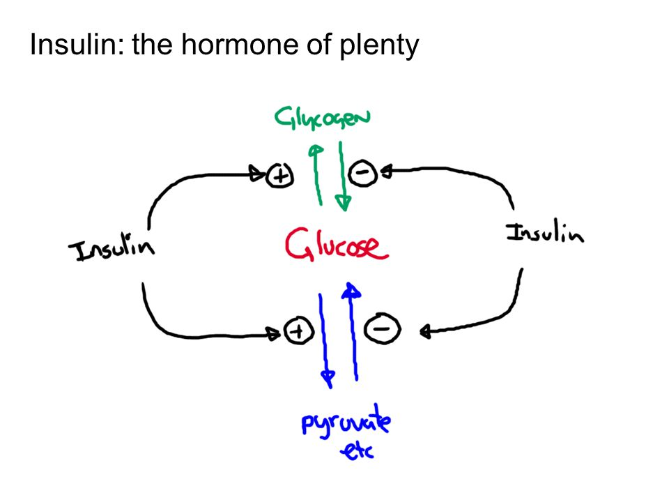Insulin: the hormone of plenty
