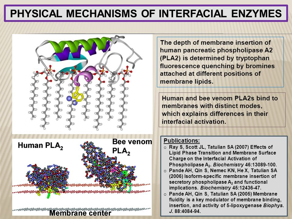 PHYSICAL MECHANISMS OF INTERFACIAL ENZYMES
