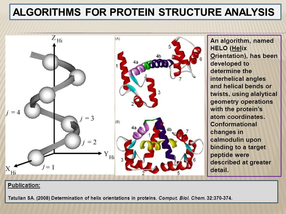 ALGORITHMS FOR PROTEIN STRUCTURE ANALYSIS