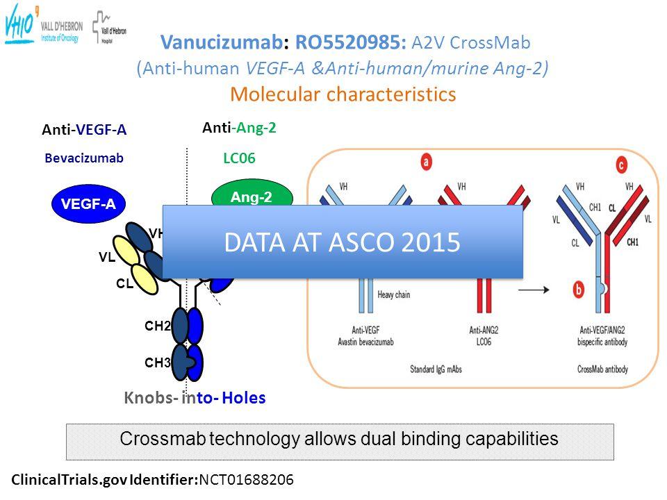 Crossmab technology allows dual binding capabilities