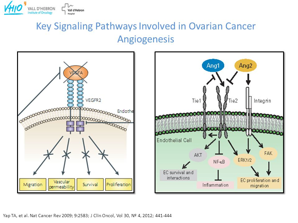 Key Signaling Pathways Involved in Ovarian Cancer Angiogenesis