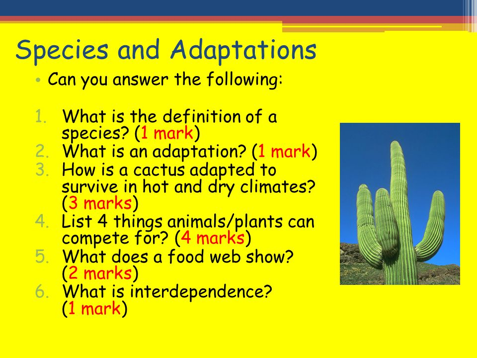 Species and Adaptations