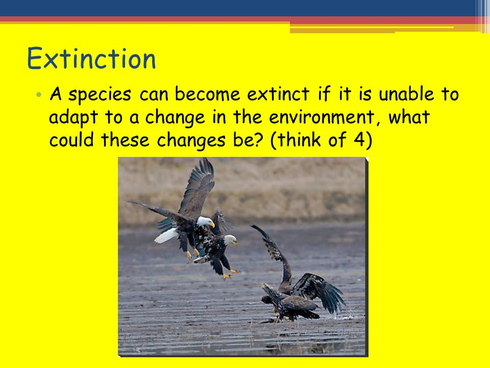 Extinction A species can become extinct if it is unable to adapt to a change in the environment, what could these changes be.
