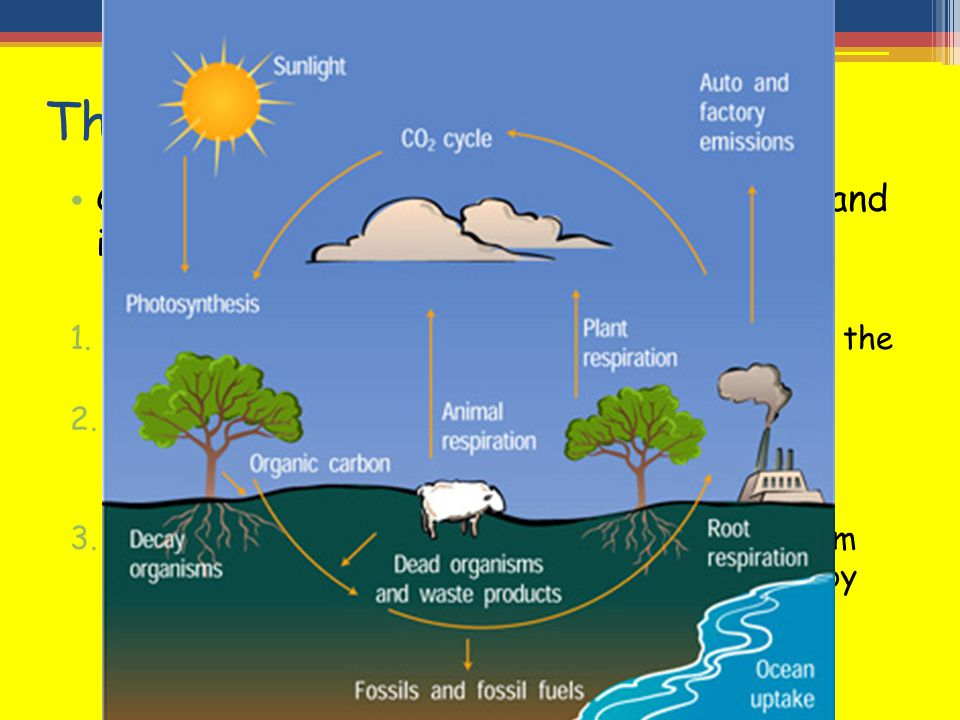 The carbon cycle Carbon is a key element in all living things and is continually recycled as follows: