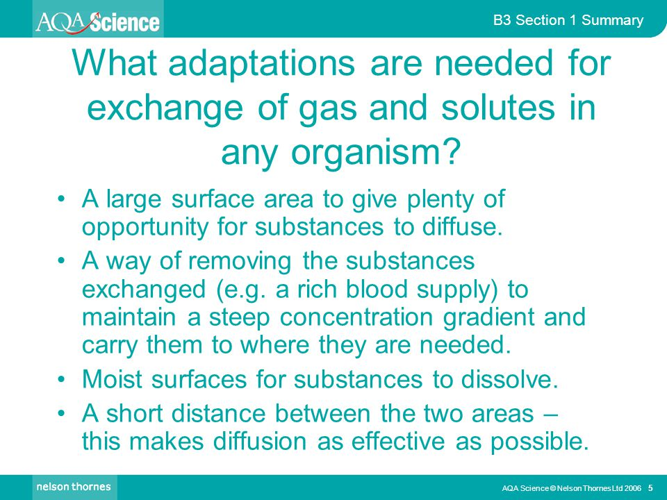 What adaptations are needed for exchange of gas and solutes in any organism