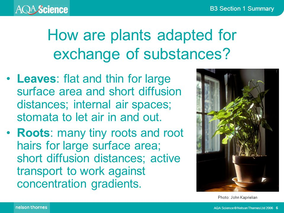 How are plants adapted for exchange of substances