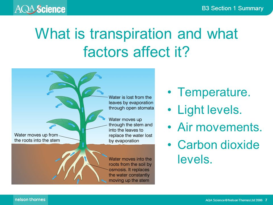 What is transpiration and what factors affect it