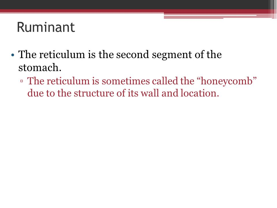 Ruminant The reticulum is the second segment of the stomach.
