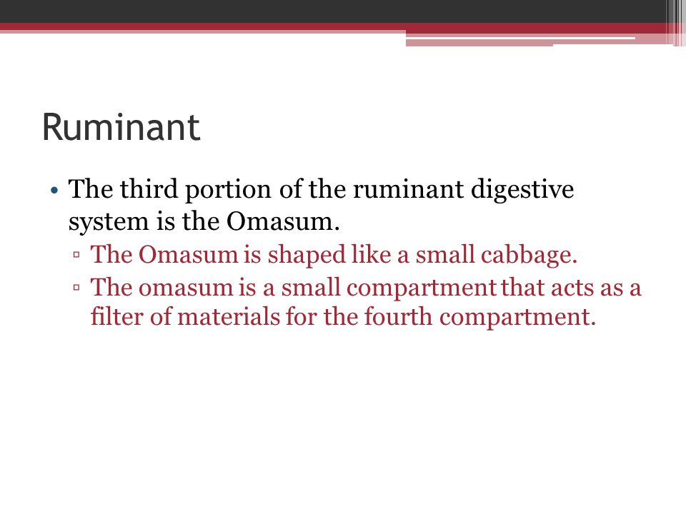 Ruminant The third portion of the ruminant digestive system is the Omasum. The Omasum is shaped like a small cabbage.