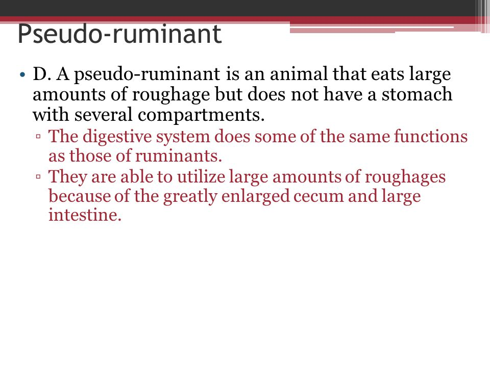 Pseudo-ruminant D. A pseudo-ruminant is an animal that eats large amounts of roughage but does not have a stomach with several compartments.
