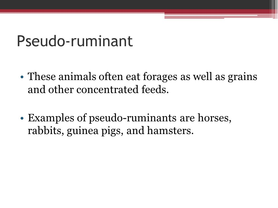 Pseudo-ruminant These animals often eat forages as well as grains and other concentrated feeds.
