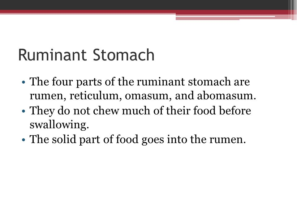 Ruminant Stomach The four parts of the ruminant stomach are rumen, reticulum, omasum, and abomasum.