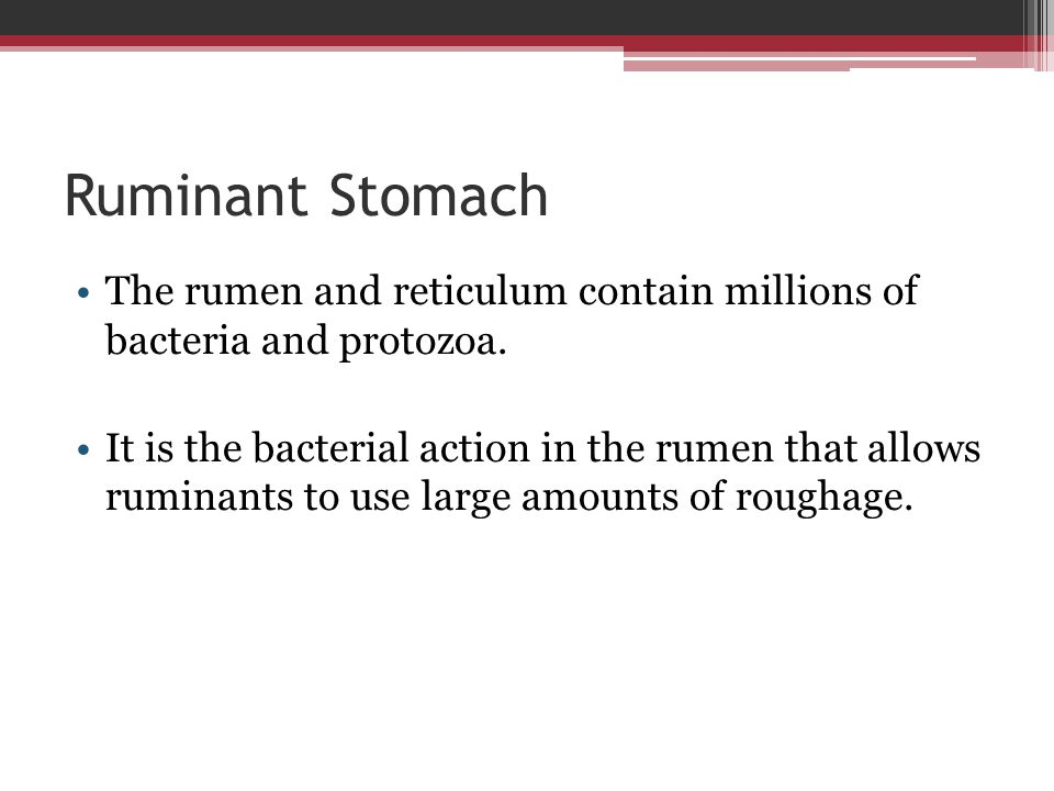 Ruminant Stomach The rumen and reticulum contain millions of bacteria and protozoa.