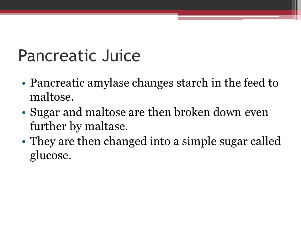 Pancreatic Juice Pancreatic amylase changes starch in the feed to maltose. Sugar and maltose are then broken down even further by maltase.