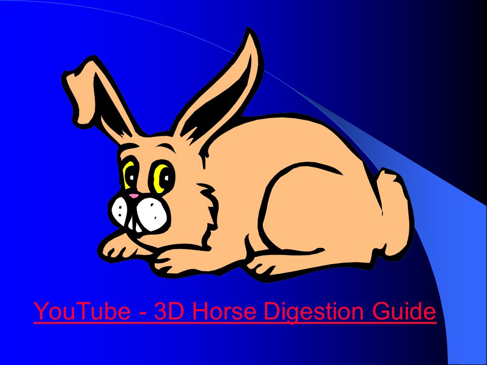 YouTube - 3D Horse Digestion Guide