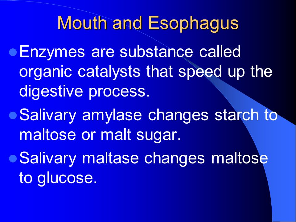 Mouth and Esophagus Enzymes are substance called organic catalysts that speed up the digestive process.