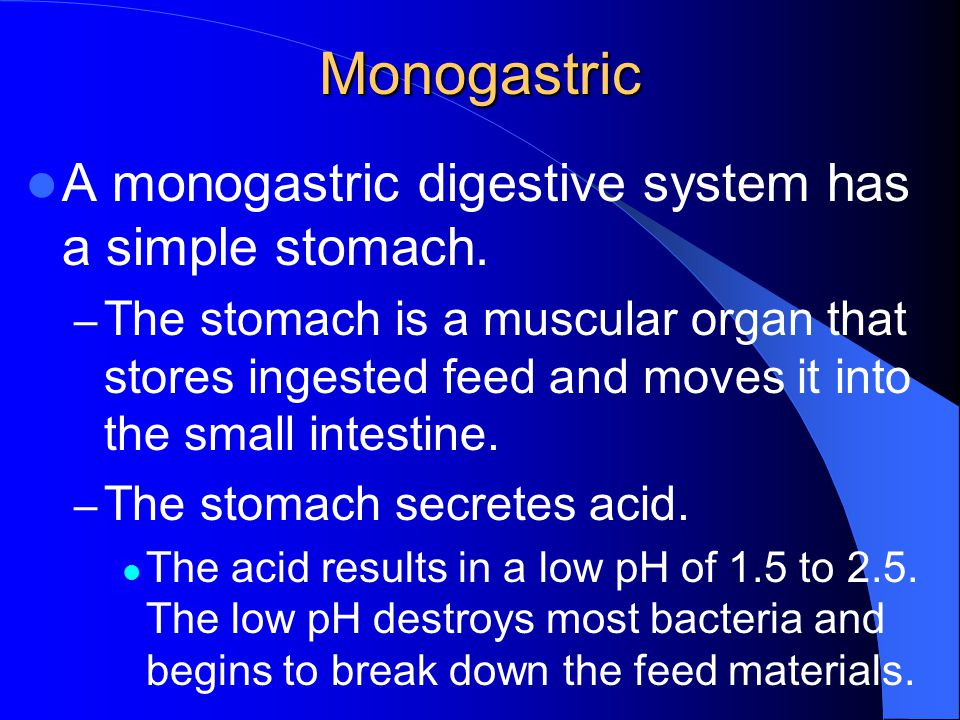 Monogastric A monogastric digestive system has a simple stomach.
