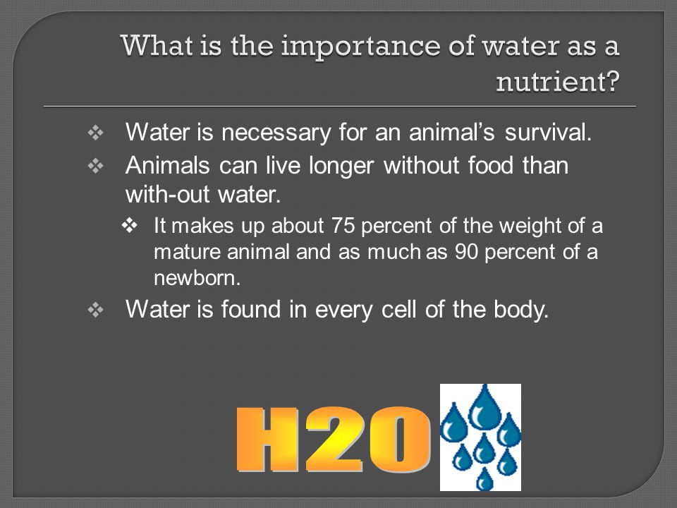 What is the importance of water as a nutrient