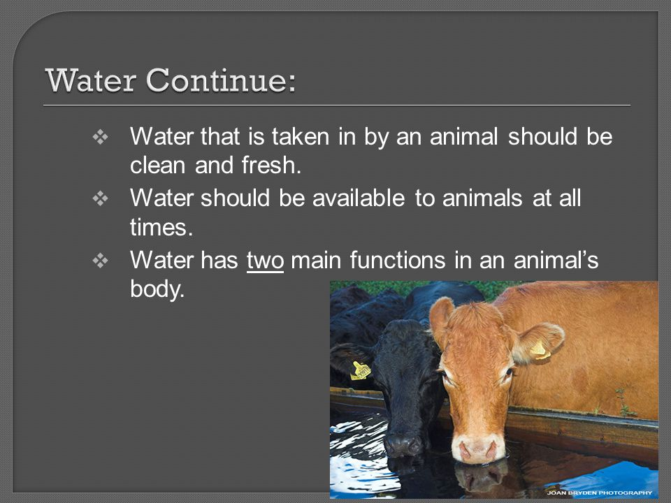 Water Continue: Water that is taken in by an animal should be clean and fresh. Water should be available to animals at all times.