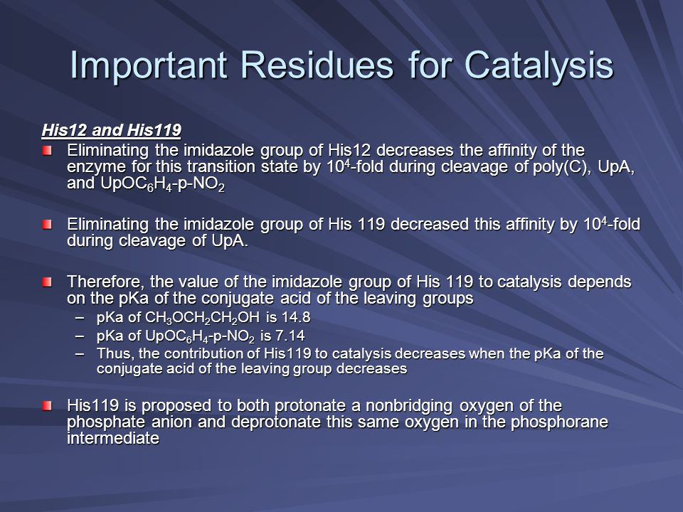 Important Residues for Catalysis