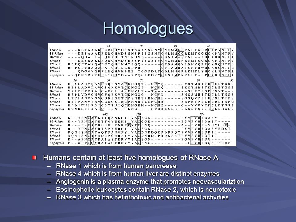 Homologues Humans contain at least five homologues of RNase A